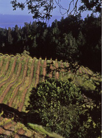 Fort Ross Vineyard