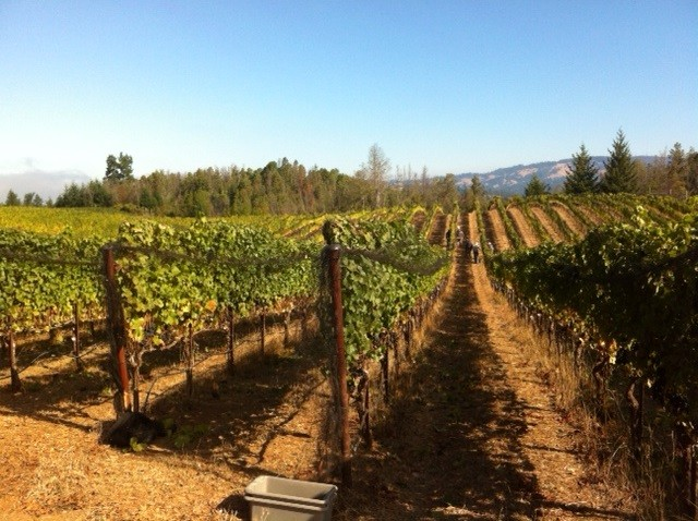 Ticket: 2016 Summer Solstice Vineyard Celebration
